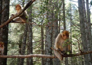 Cedar-forest-in-azrou-morocco-1024x768